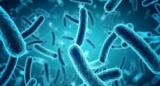 В Китае обнаружили два новых вида бактерий, устойчивых к антибиотикам