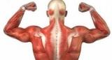 «Белок долголетия», способствует регенерации тканей