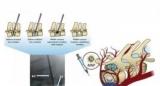 Ученые нашли способ быстрого лечения переломов позвоночника