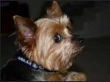 Собака может говорить о развитии рака